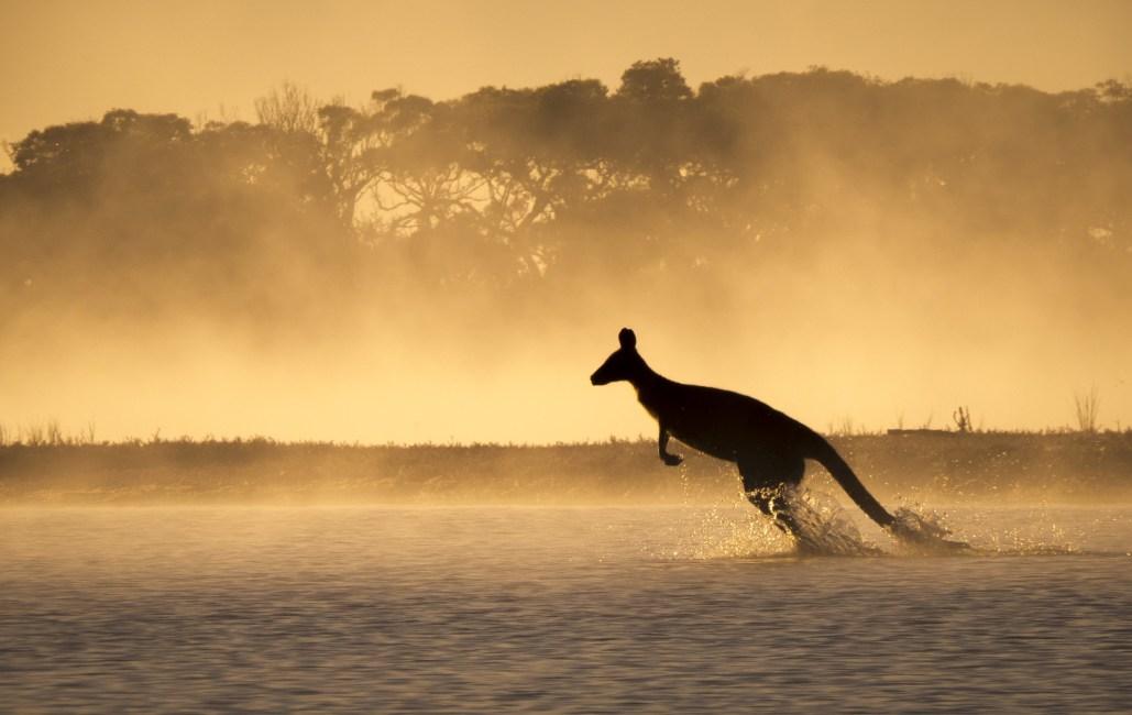 Running Roo