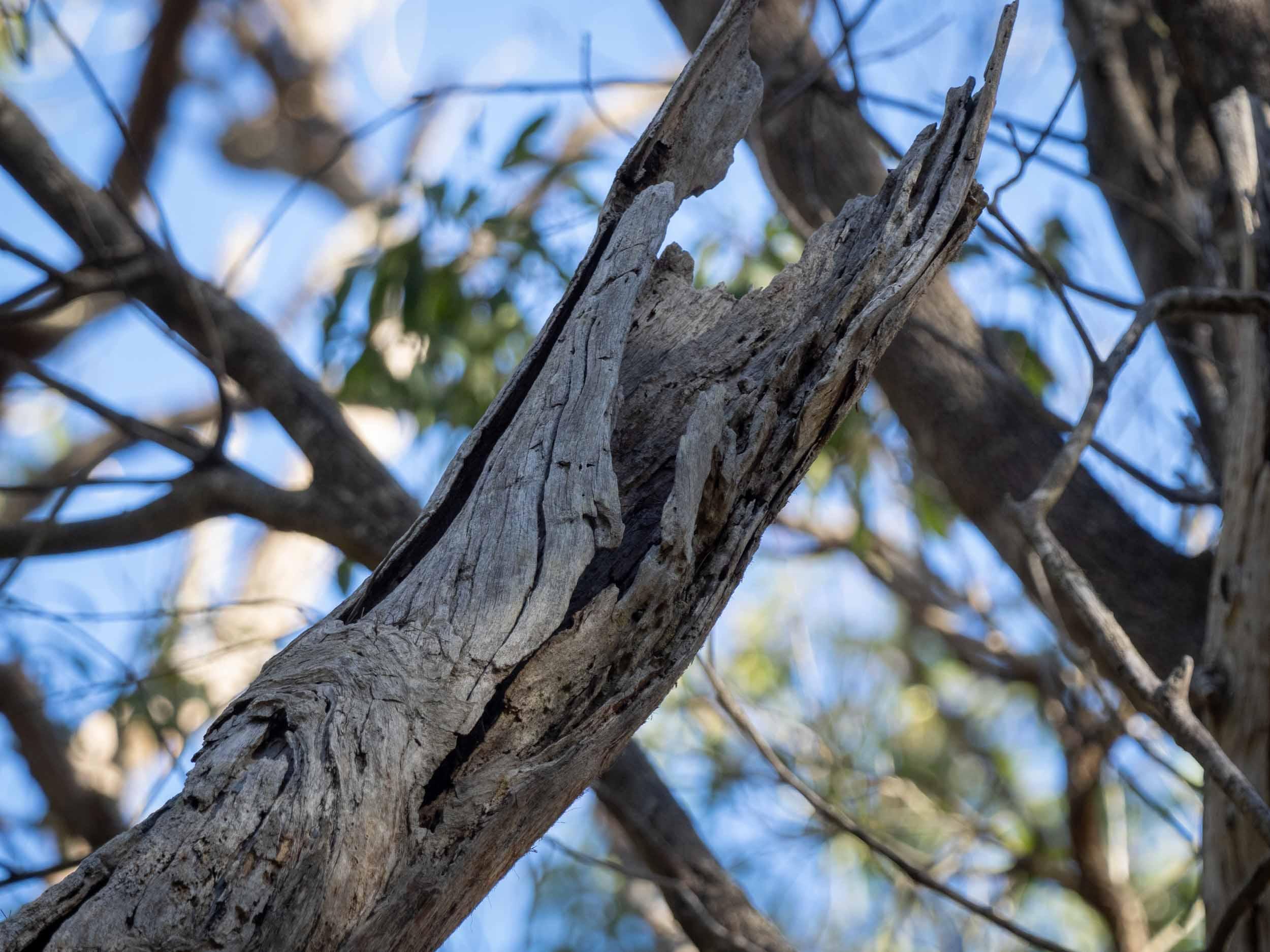 C: spout in dead tree