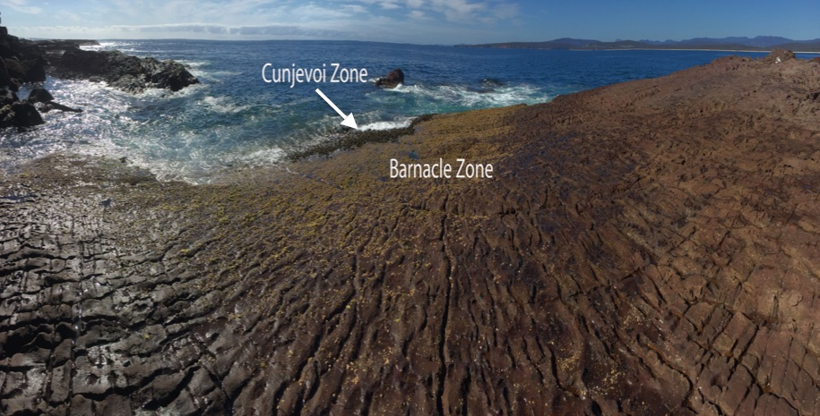 The 'barnacle zone'