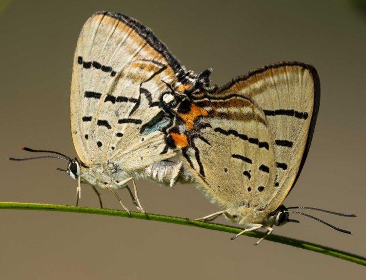 november:butterflies & day-flying moths - DTEALS COMING SOON!