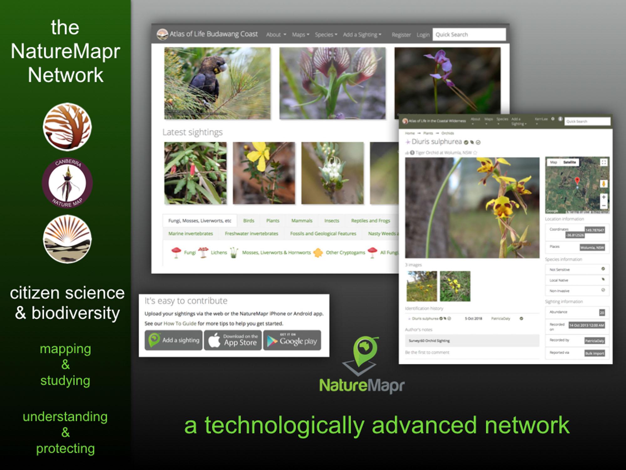 Banksia.004.jpg