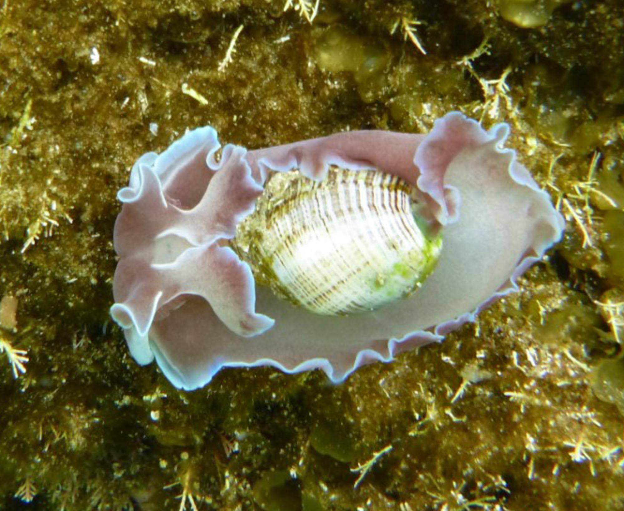 bubble shell