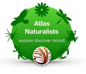 atlanats logo.jpg