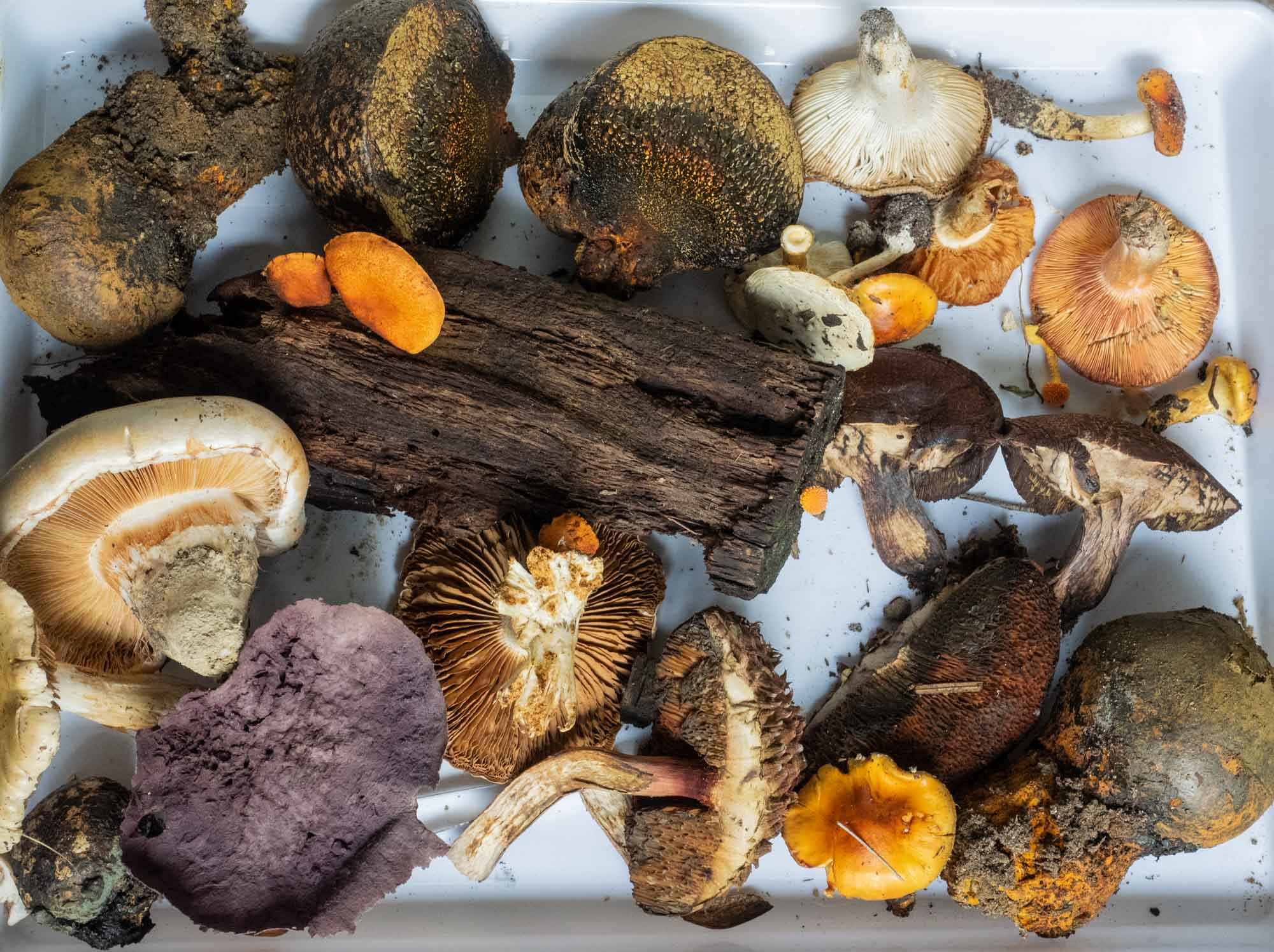 Some of the mushrooms and other fungi brought along to the Workshop