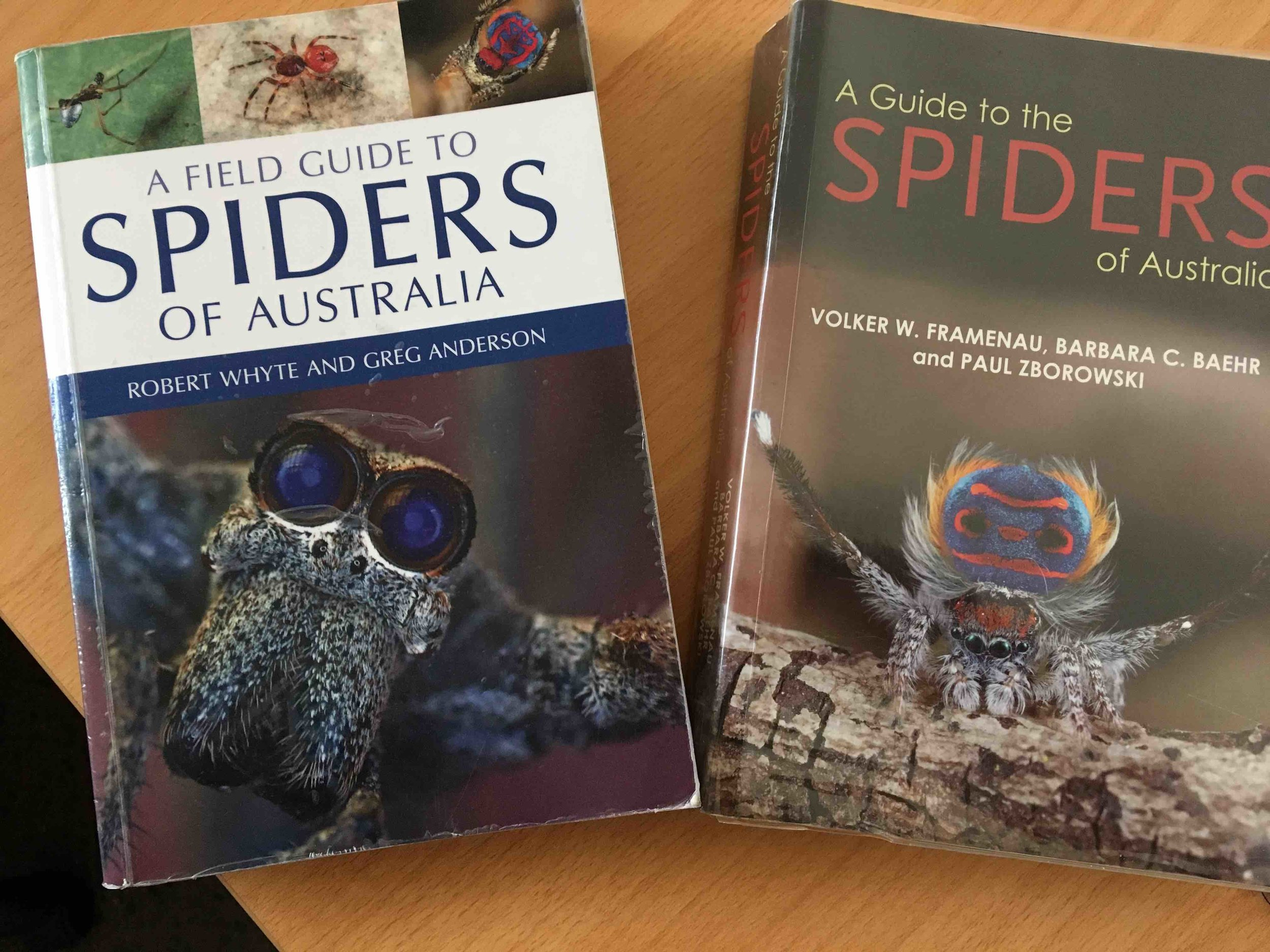 Two excellent books on Australian spider families - see reference section below for full details.