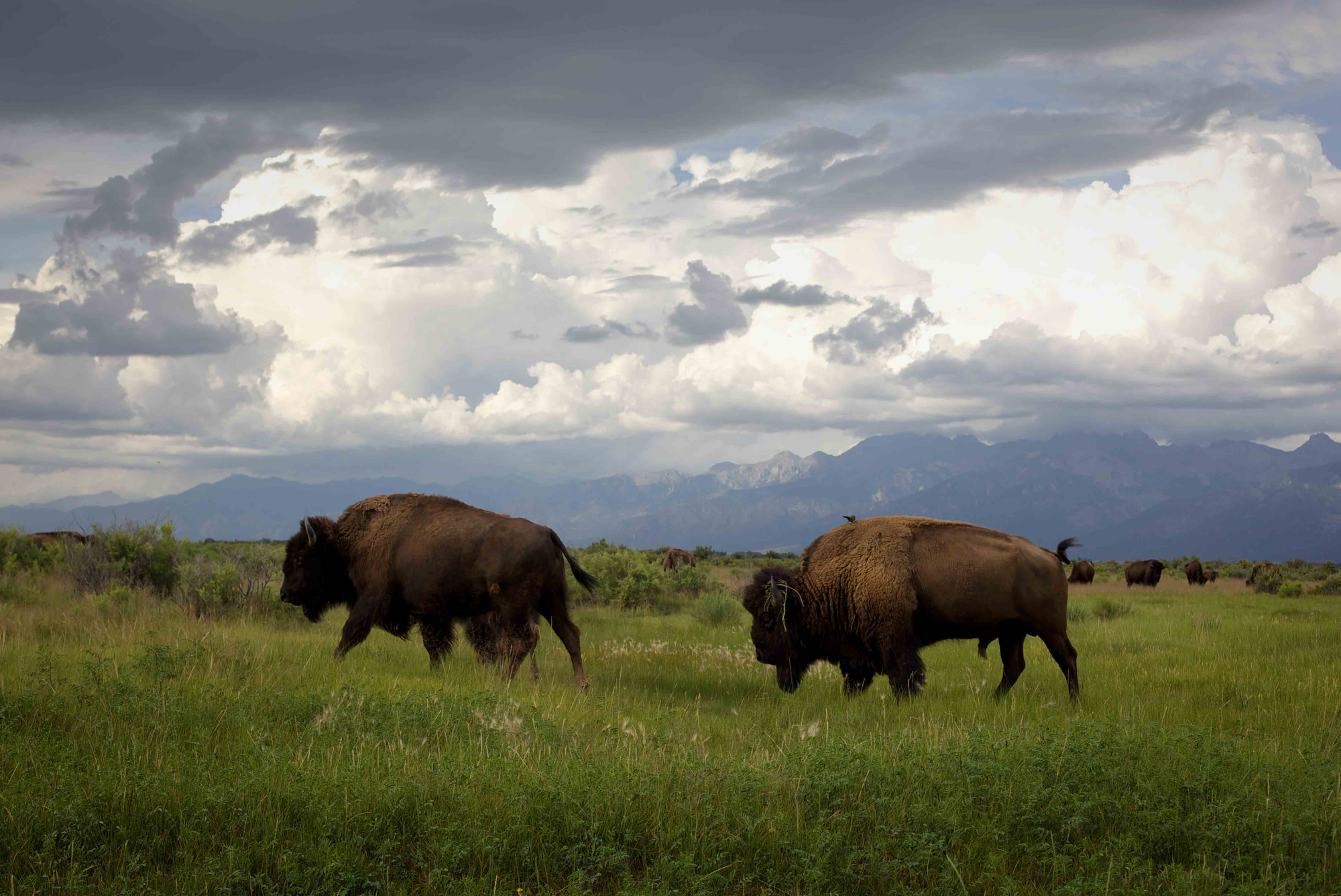 8.1 zapata bison landscape (2).JPG