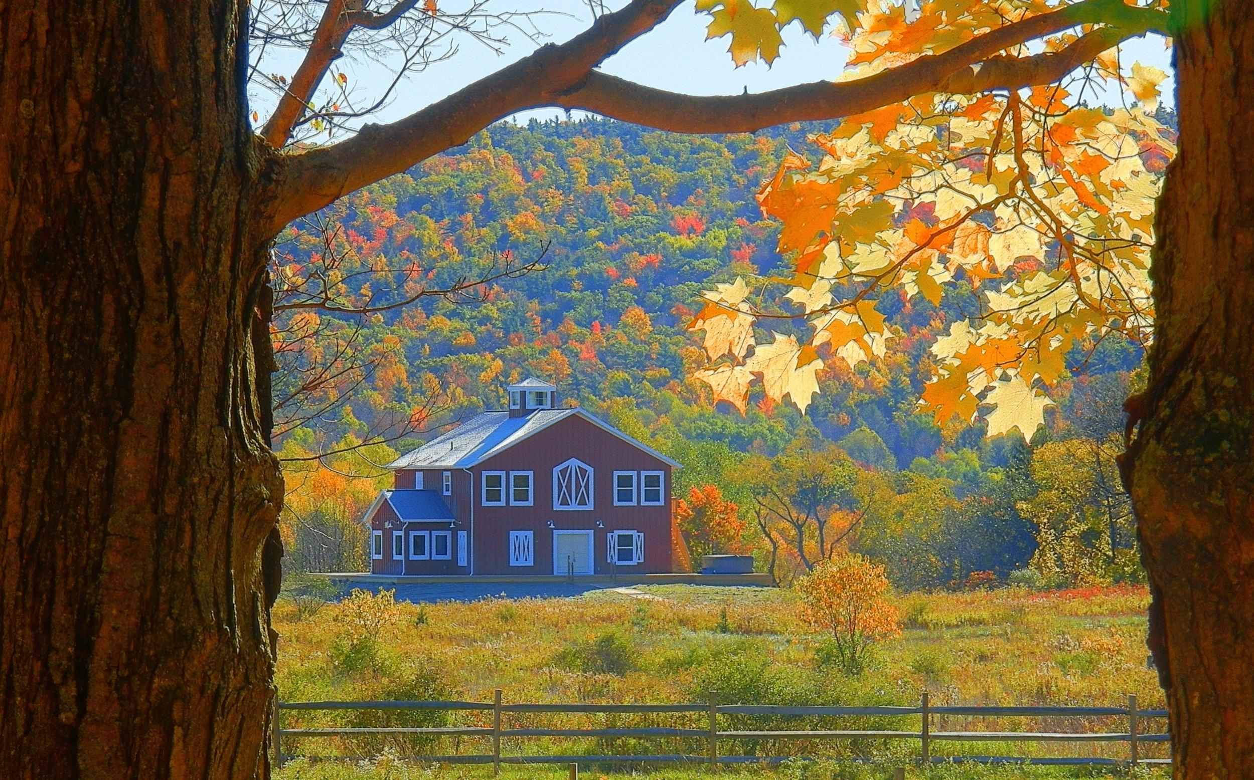Mountain Horse Farm