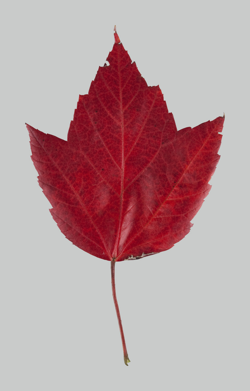 091023_leaf_01.jpg