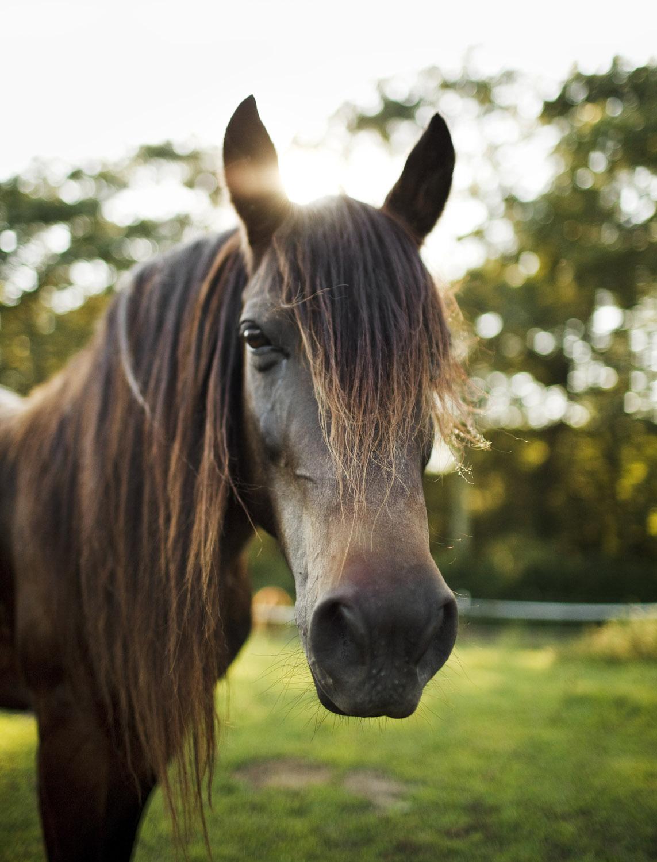 110817_HorsePlay_407.jpg