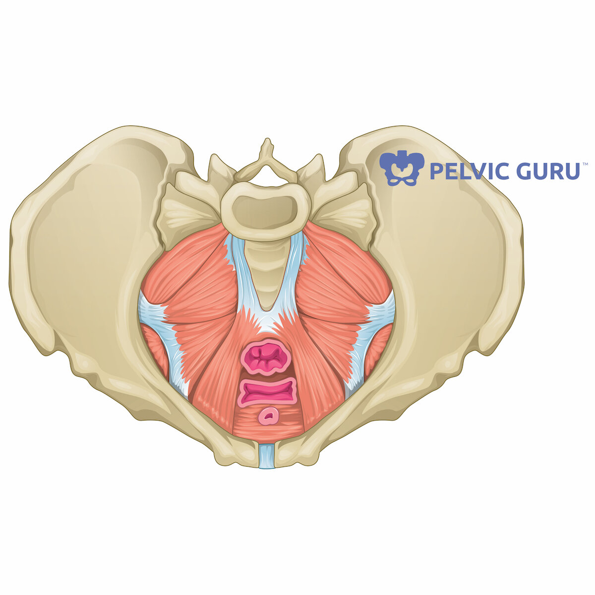 Why pelvic floor physical therapy