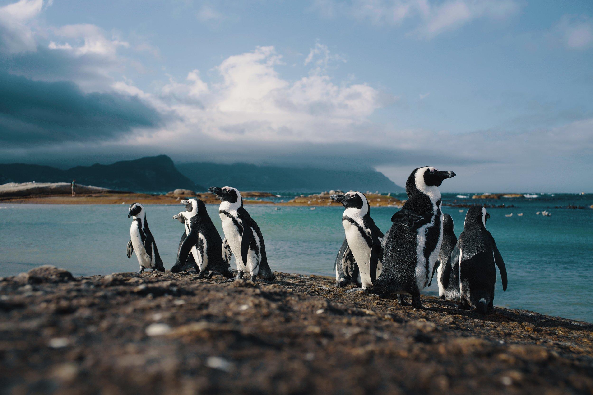 Boulders Beach, Cape Town 2018. By CJ Kask.