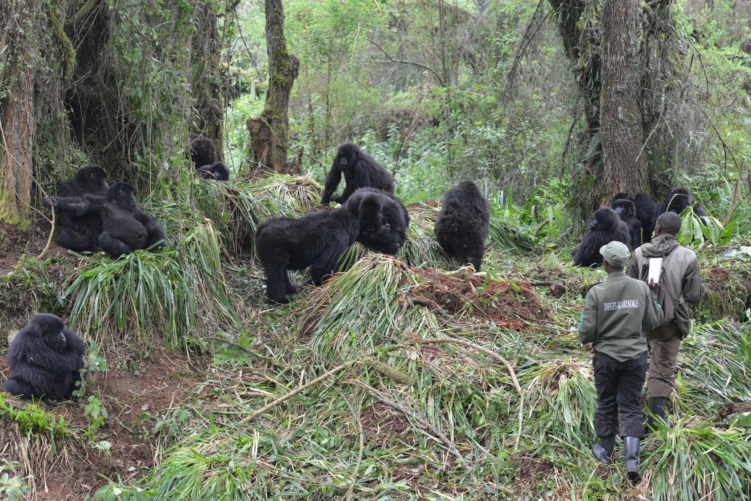 Copy of Rwanda20150203KUY_DSC_0619 Galbani102 (1).jpg