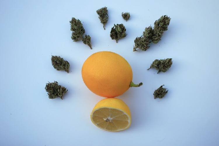 Lemon surrounded by cannabis buds with terpenes