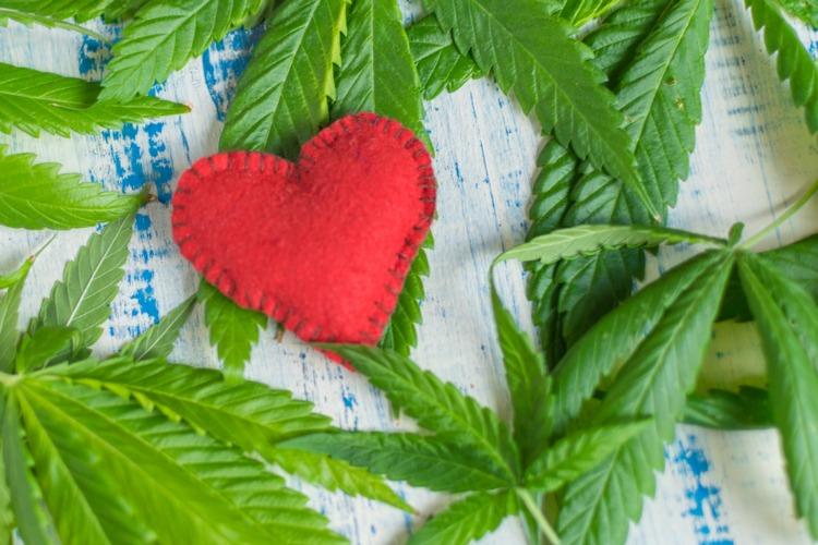 Camphene Heart in Flower