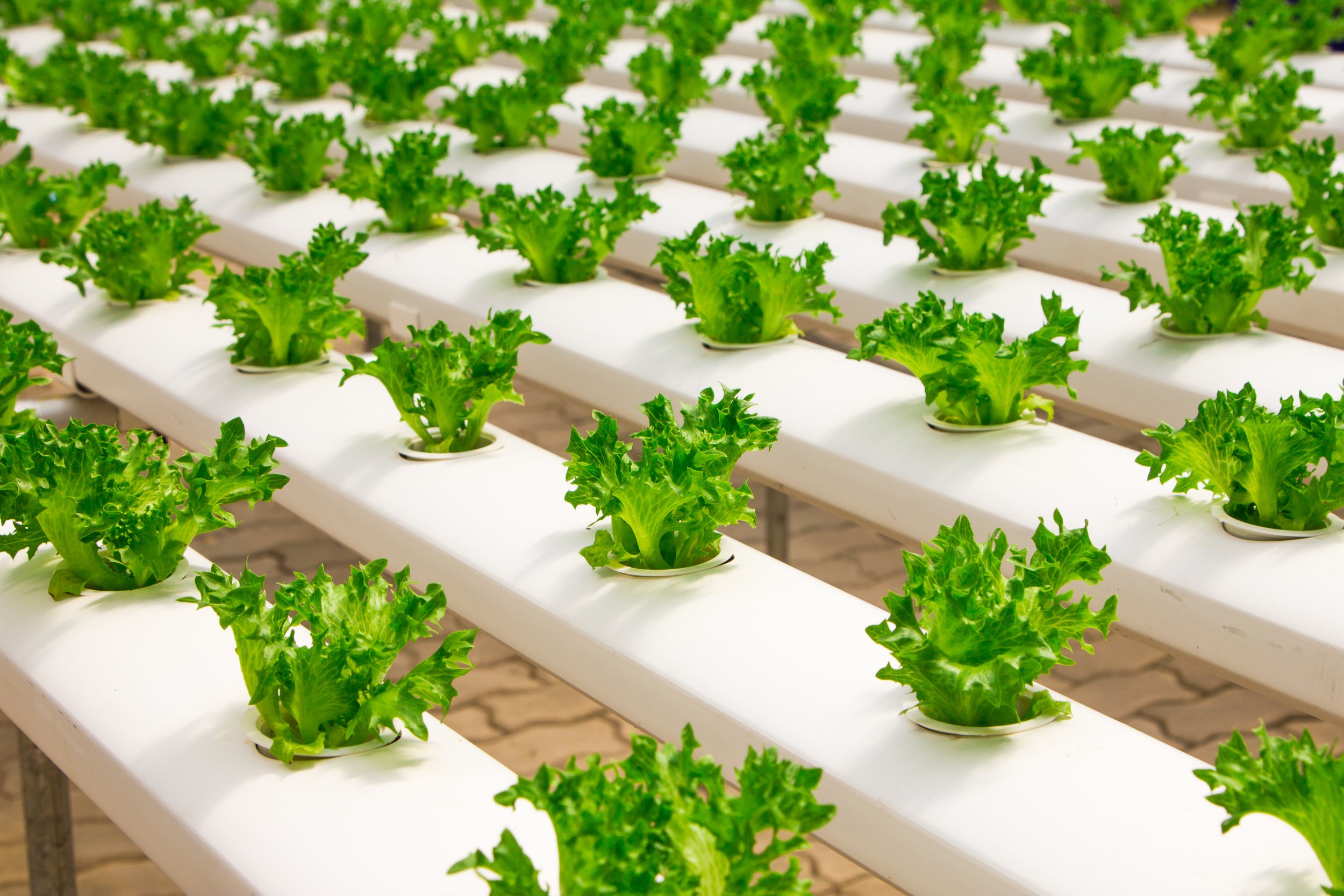 Urban Farming/ Rooftop Farming - You are planning a commercial hydroponic or aquaponic farm? Contact us! We can also help you with our competent and experienced partners for   hydroponic or aquaponic farms.