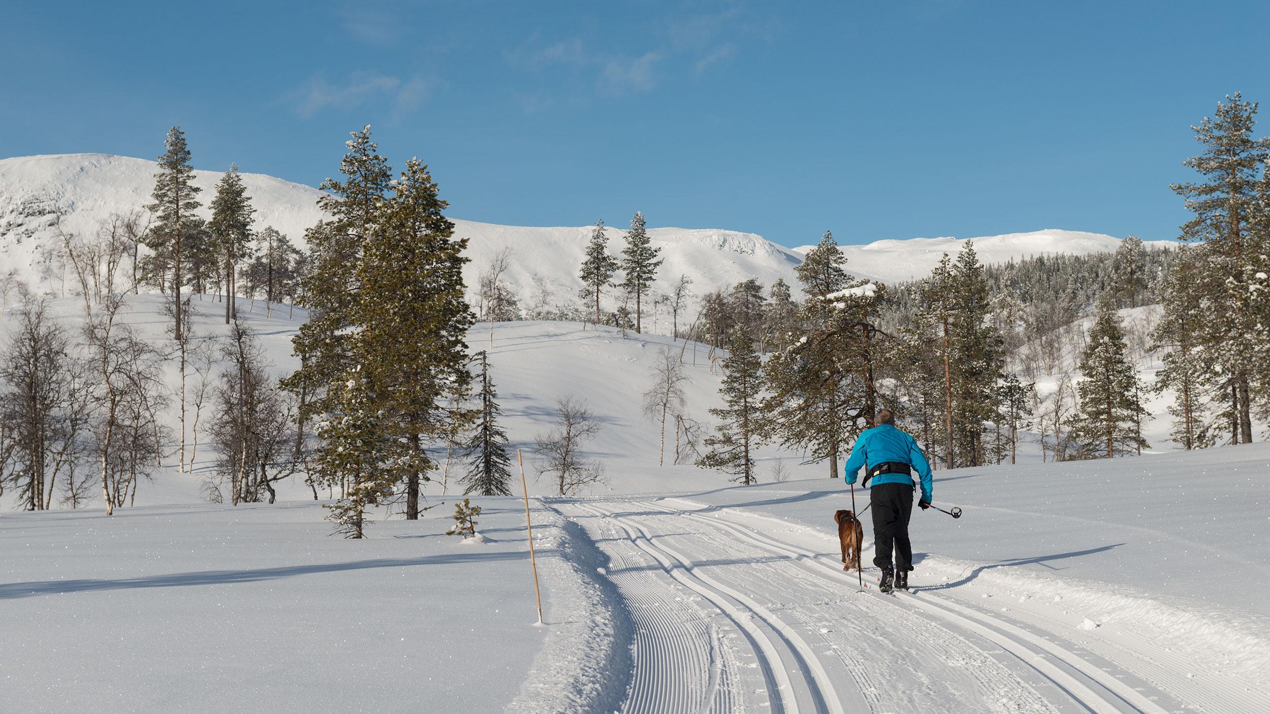 Skiløper_Sørbølfjell_SVA4306.jpg