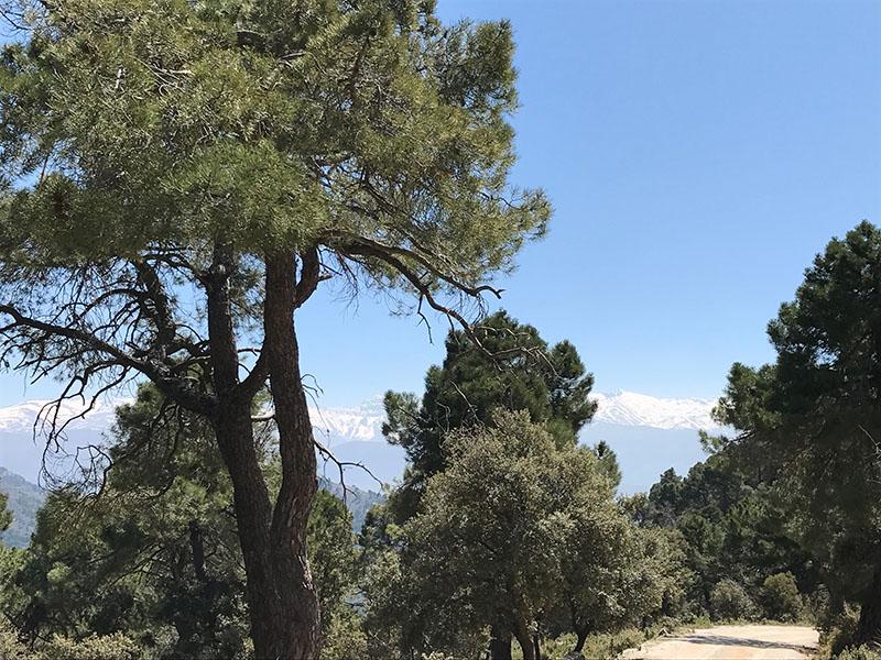 Views of the Sierra Nevada Mountains from Sierra de Huetor
