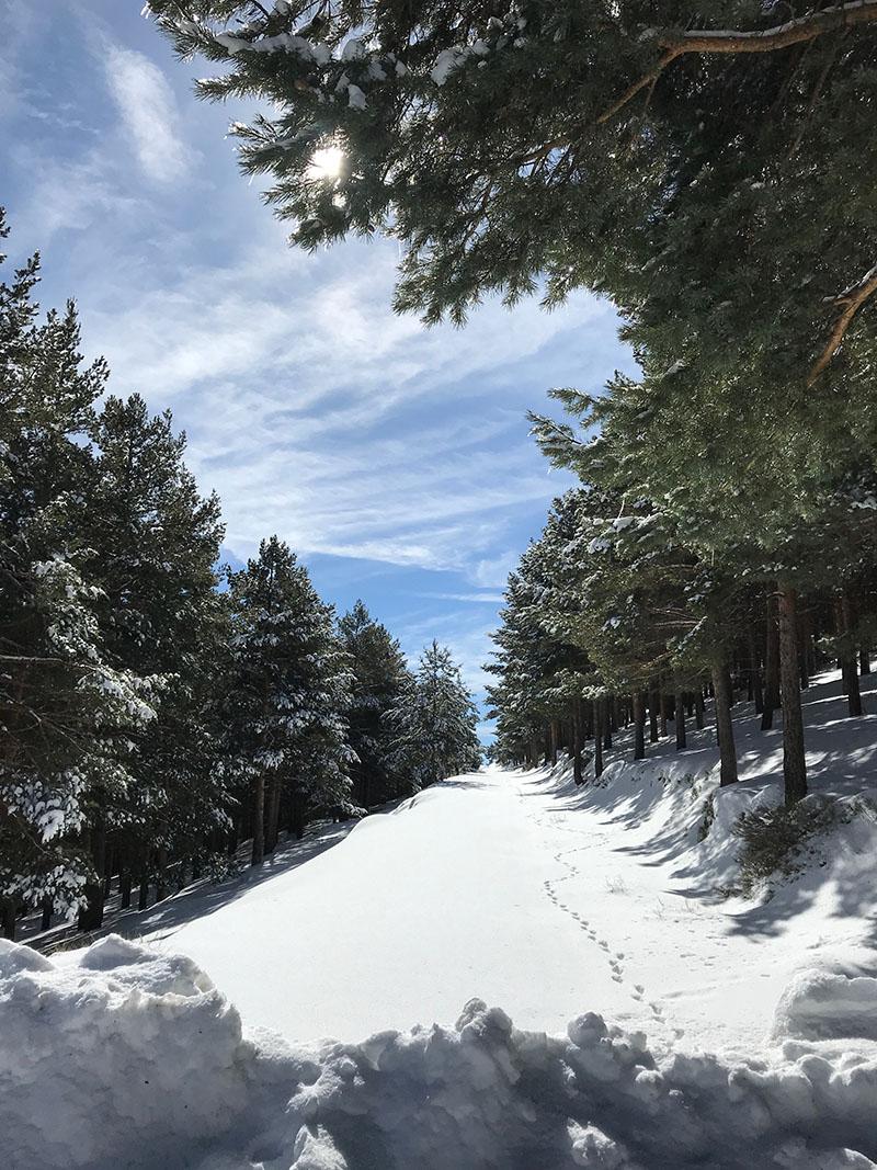 Go cross country skiing