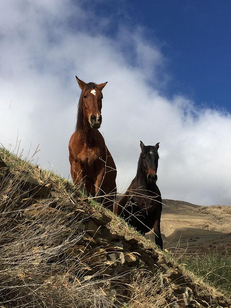 Take a pony trek through the campo