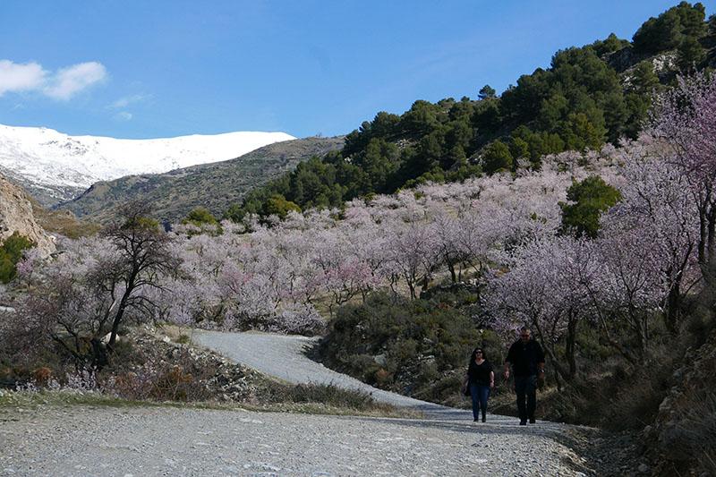 Almond Blossom walk