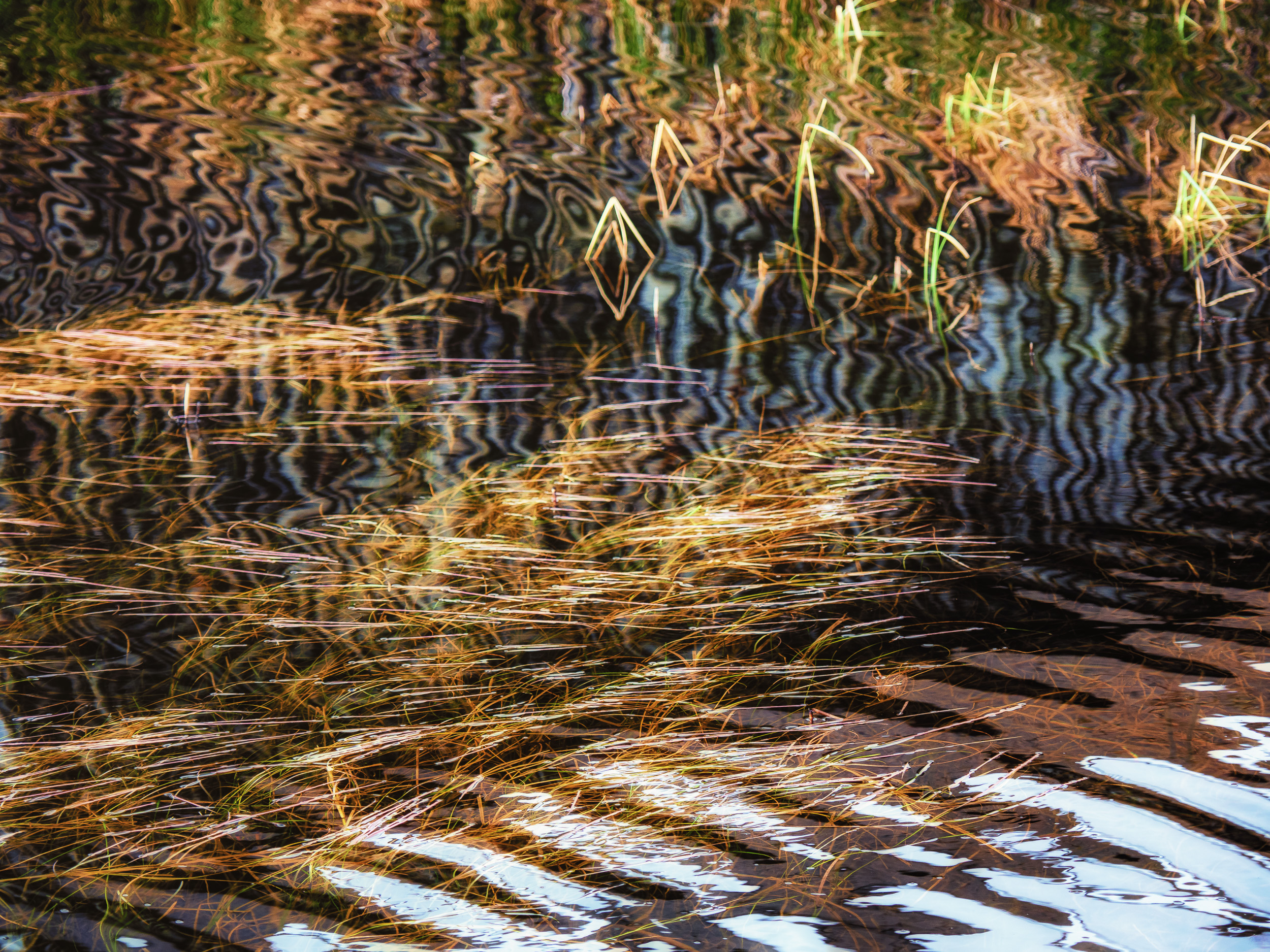 - Having enjoyed the view of the shed and boat with its carefully considered palette of colours I enjoyed the pattern of light with the ripples in the water, both with the grasses and the corrugations of the shed.