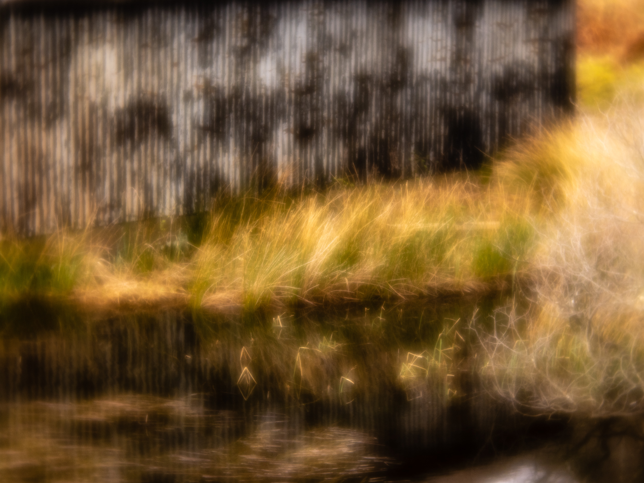 - A rather distorted view that highlights the grasses and the textures in the shed seemed apposite.