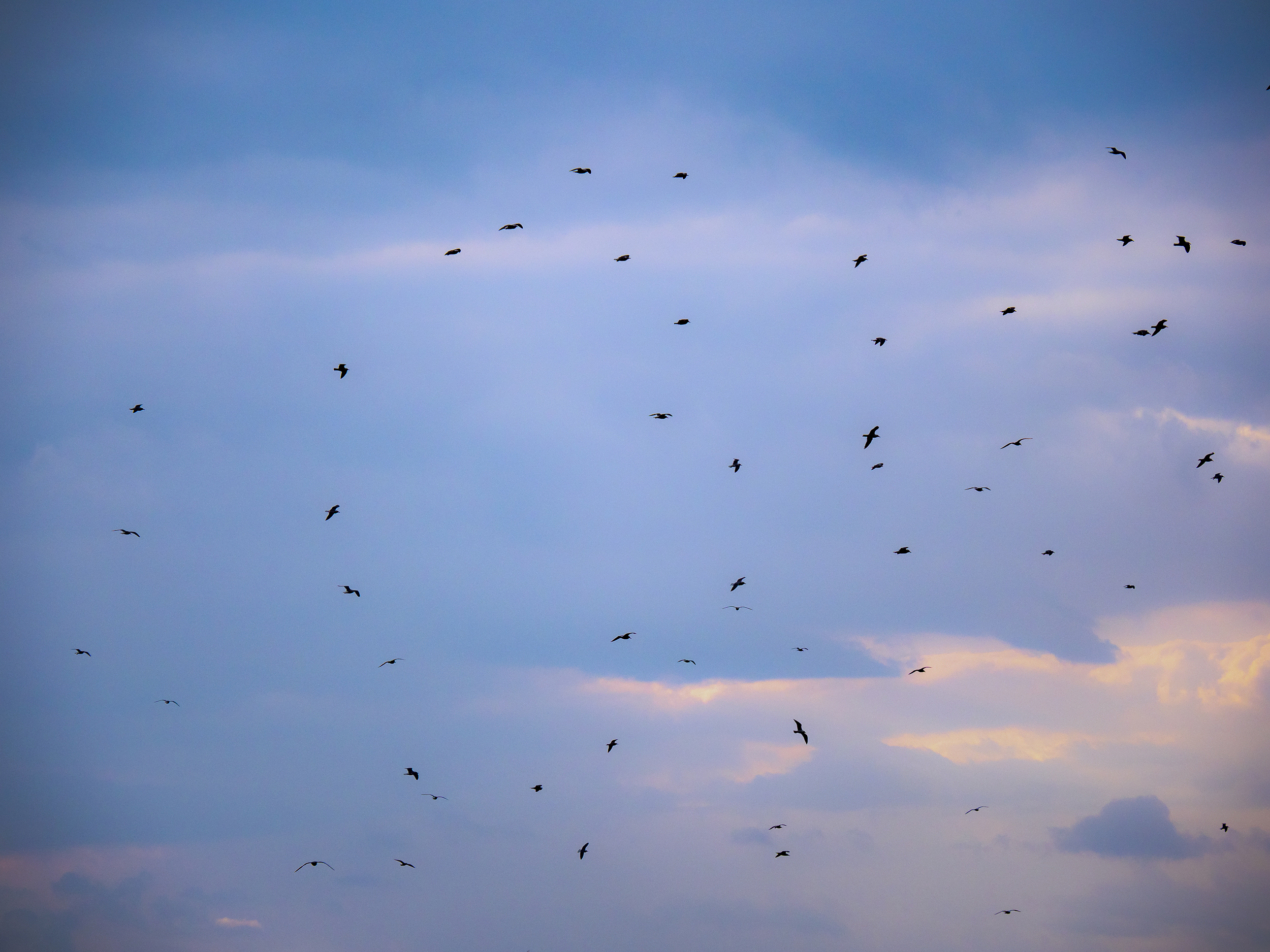 - …as the rain returns from the west with the gulls strutting their stuff…