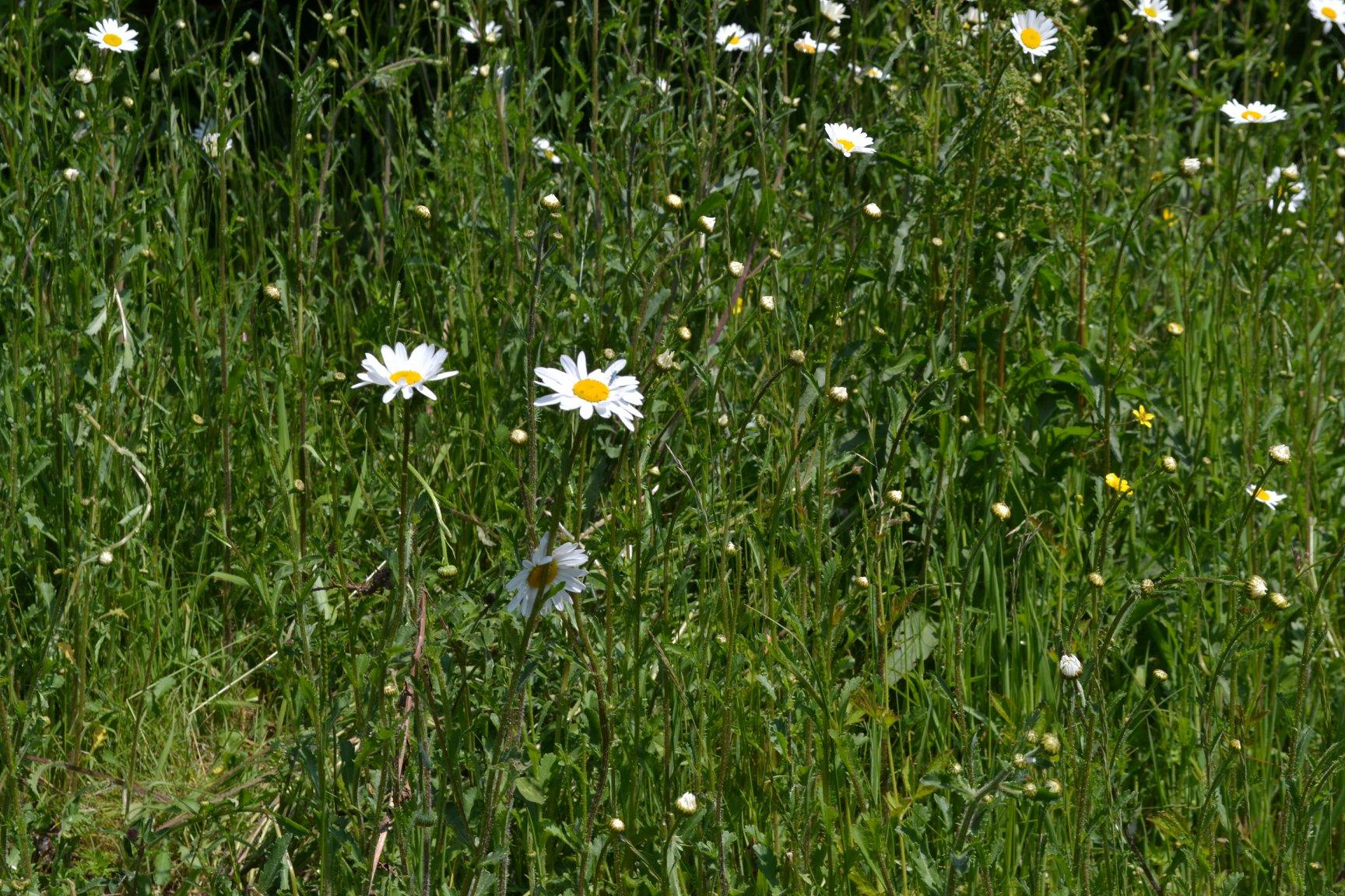 Verge side flowers