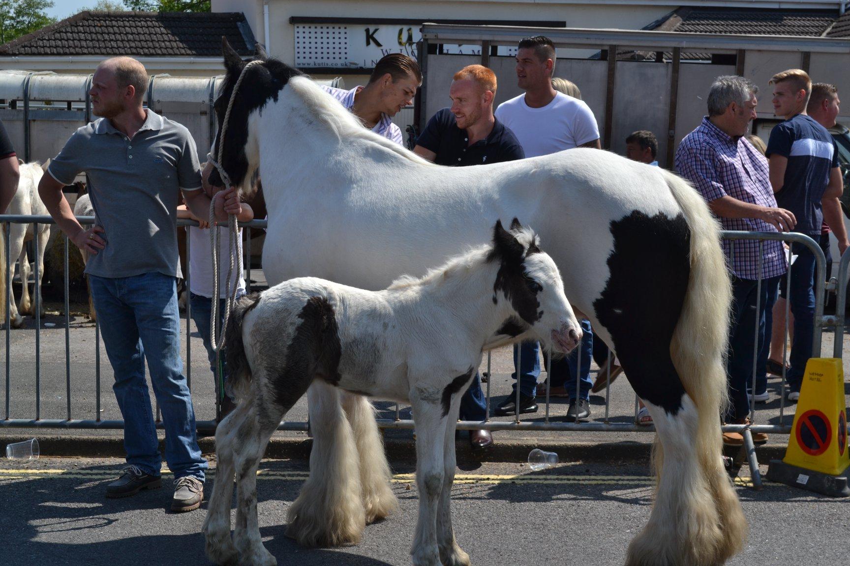 Foal at Foot