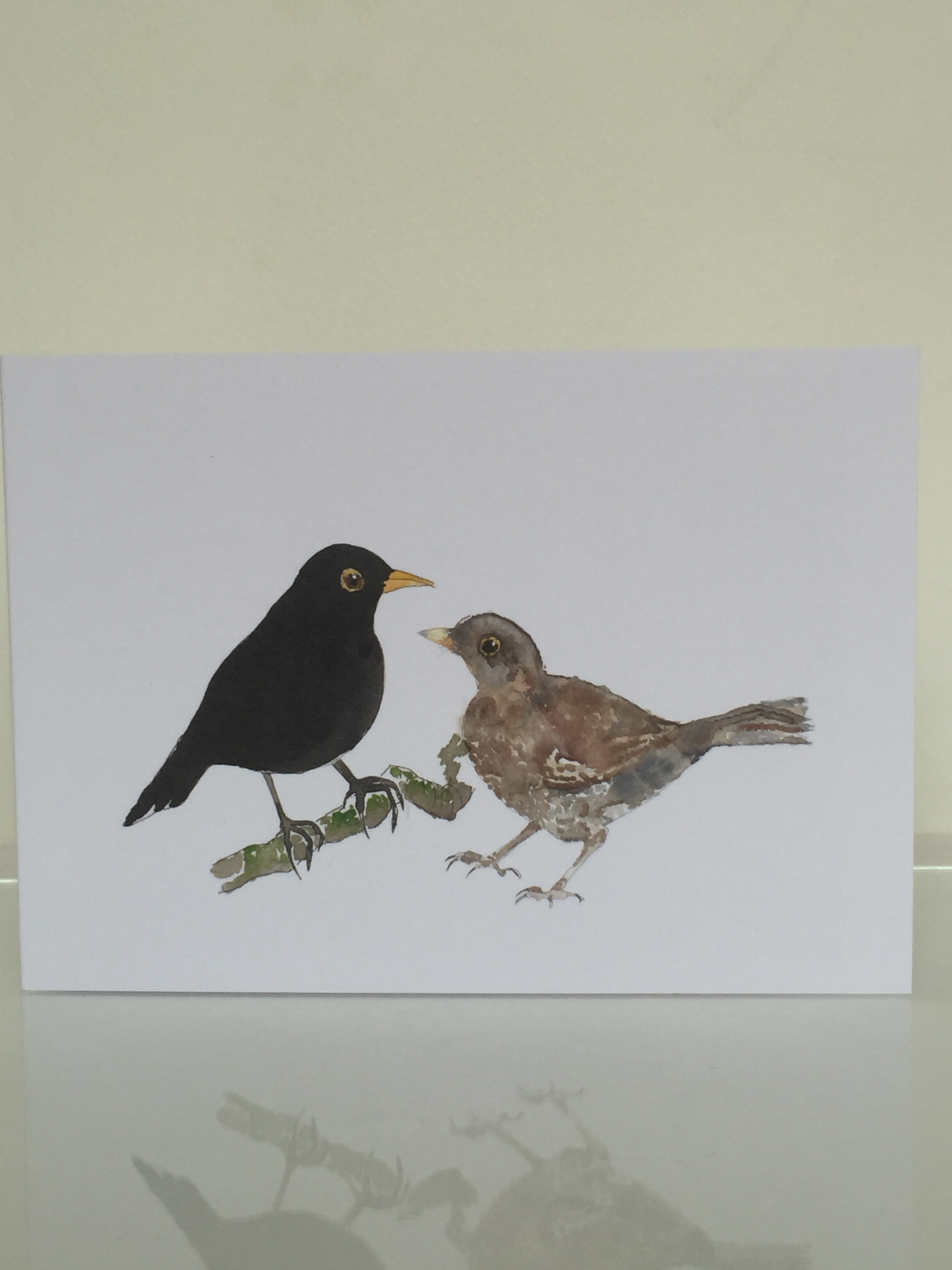 Pair of blackbirds