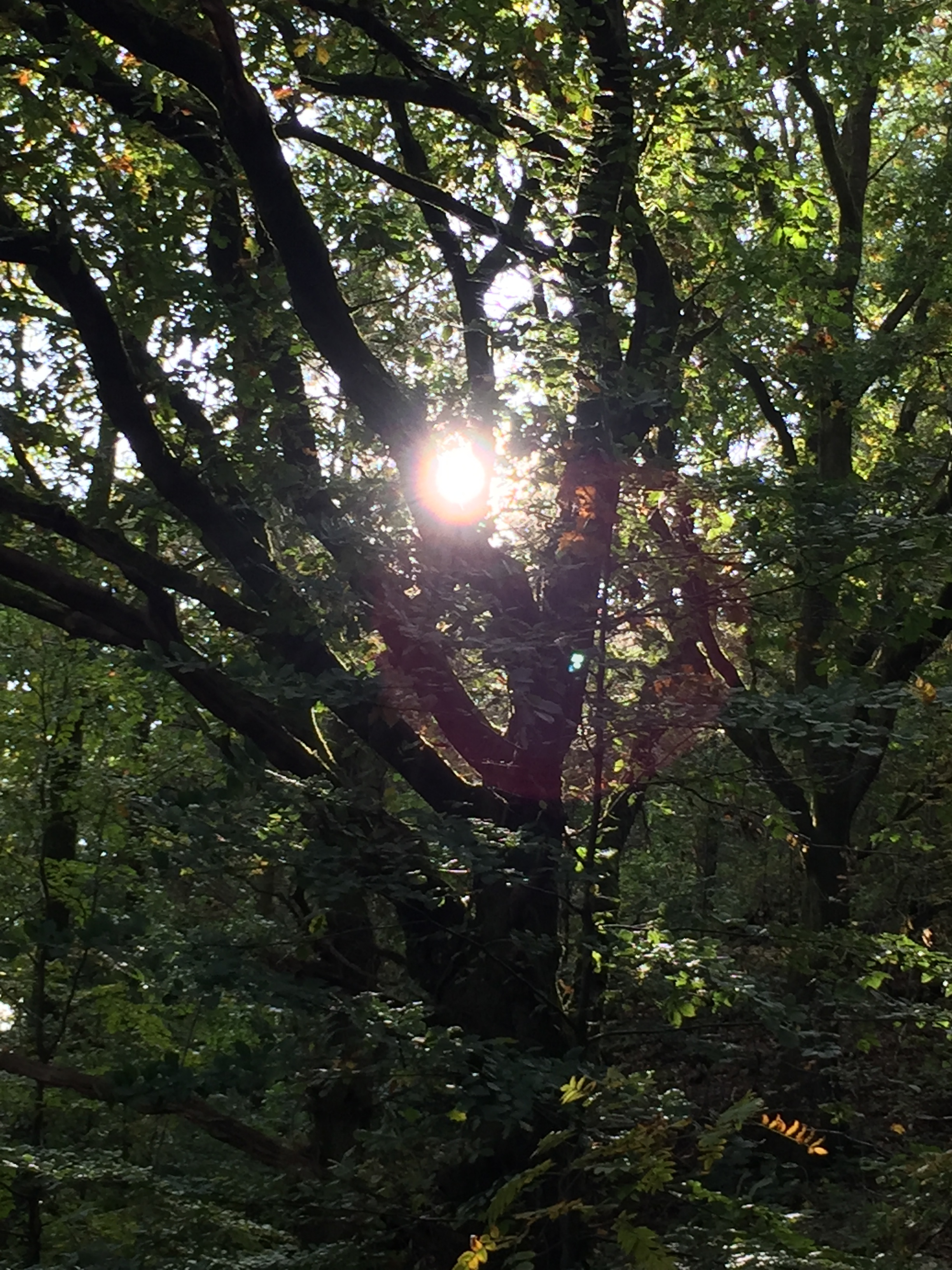 A tree dancing with the sun