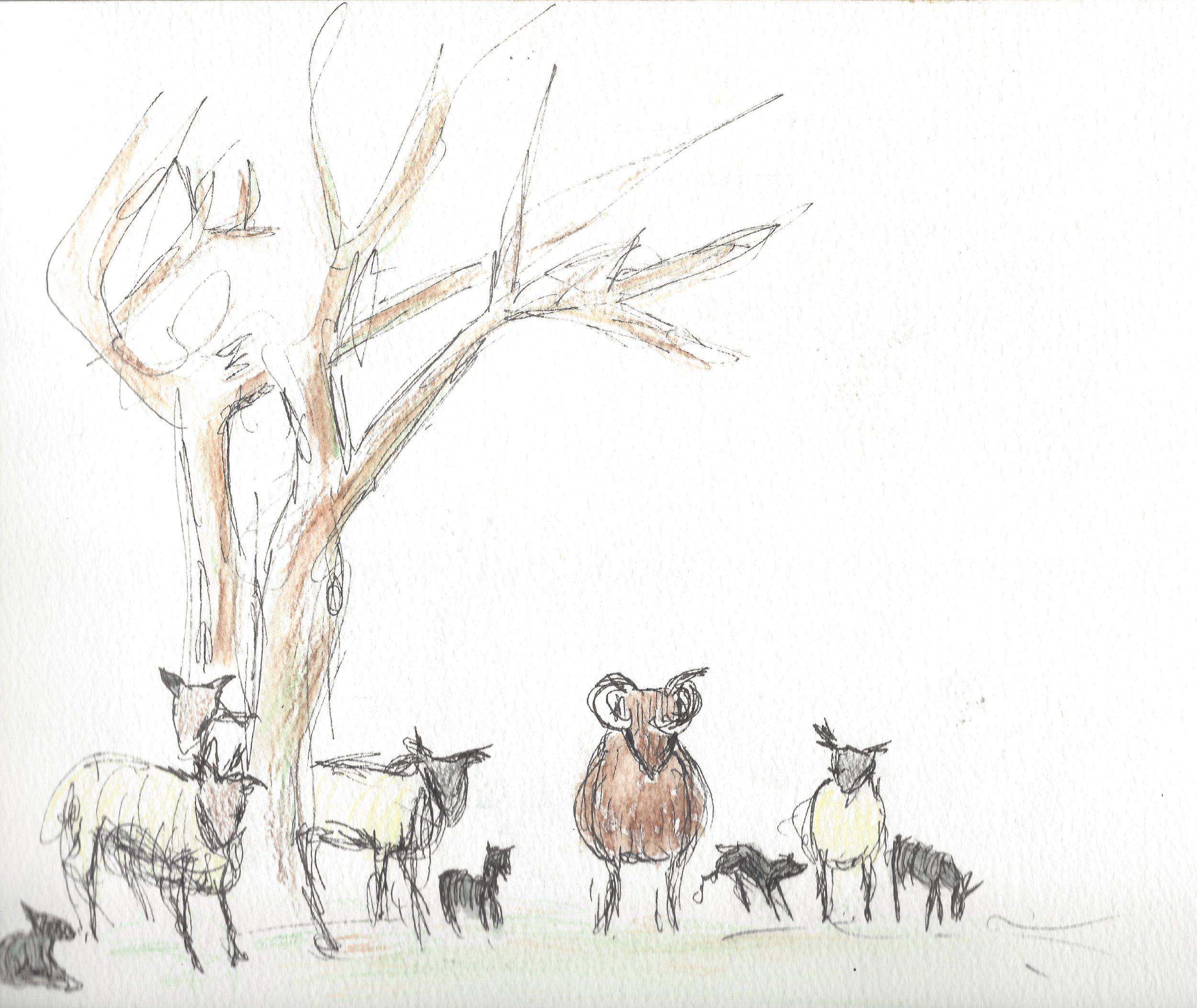 1503-spring lambs 20001.jpg