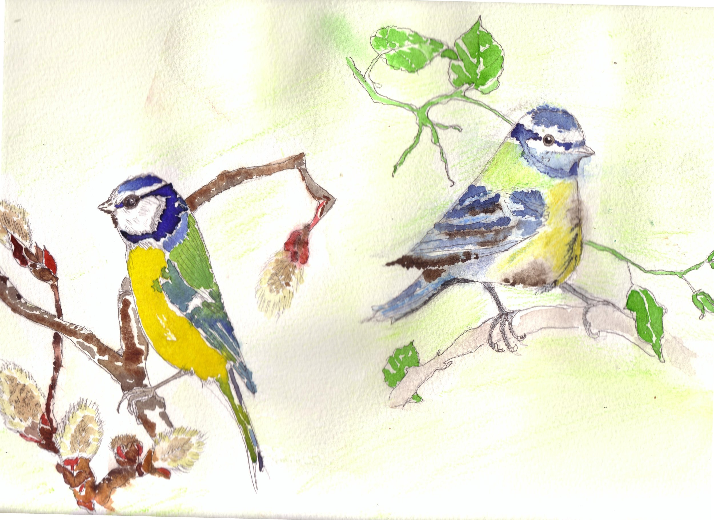 bluebird-3.JPG