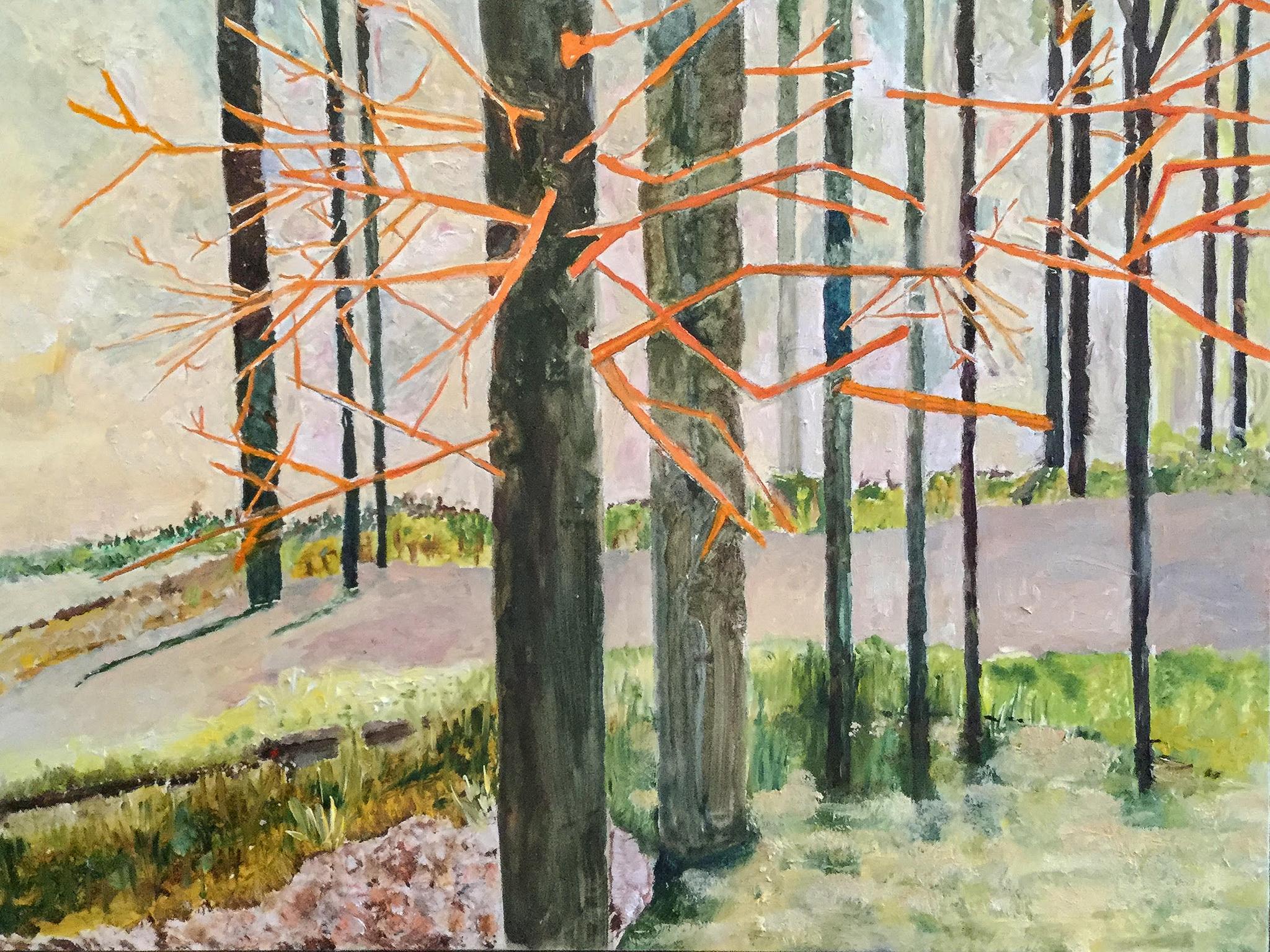 Dark Trees in Sunshine