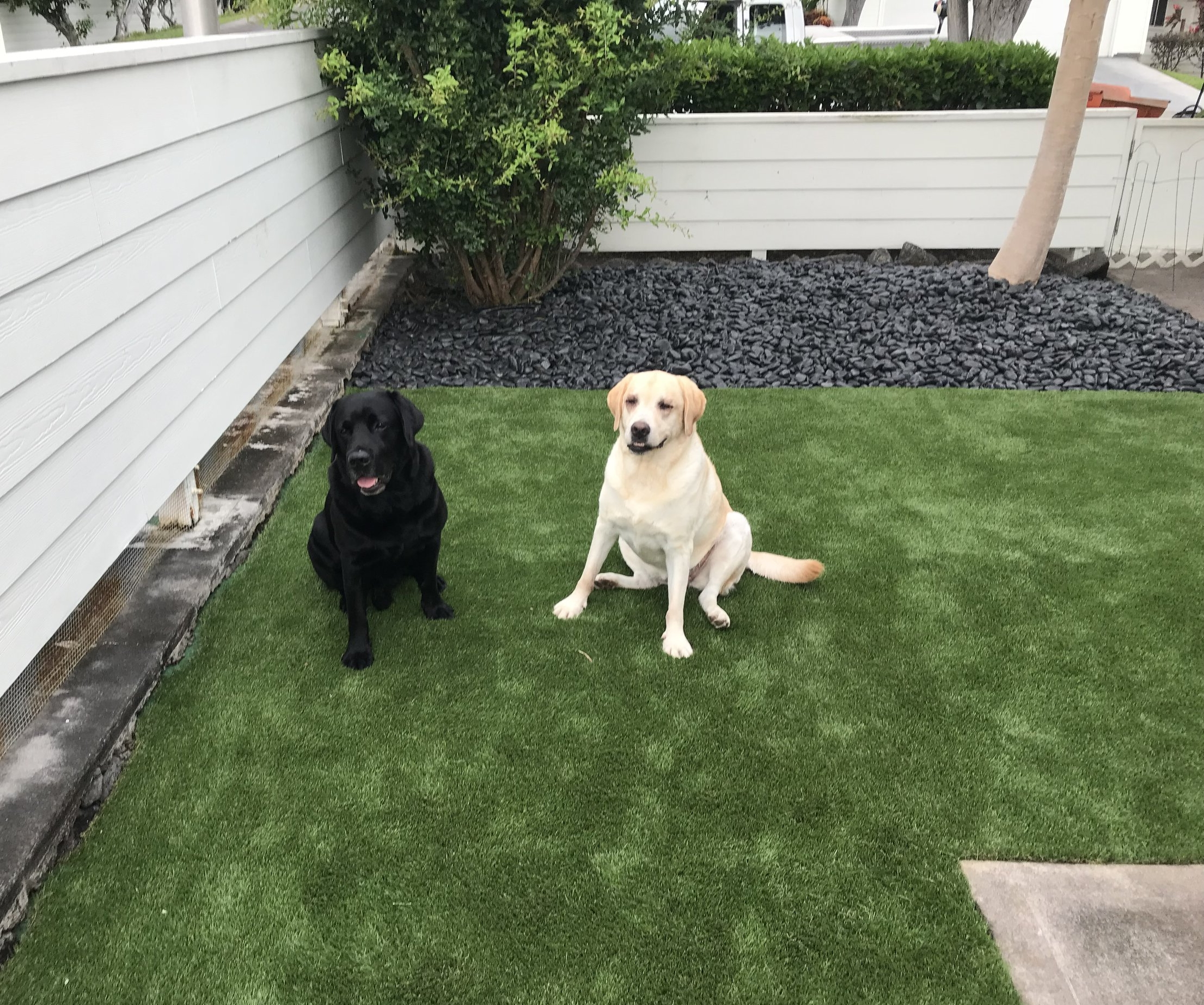Give your dogs a year around clean play area with DreamTurf! - ___________________________________