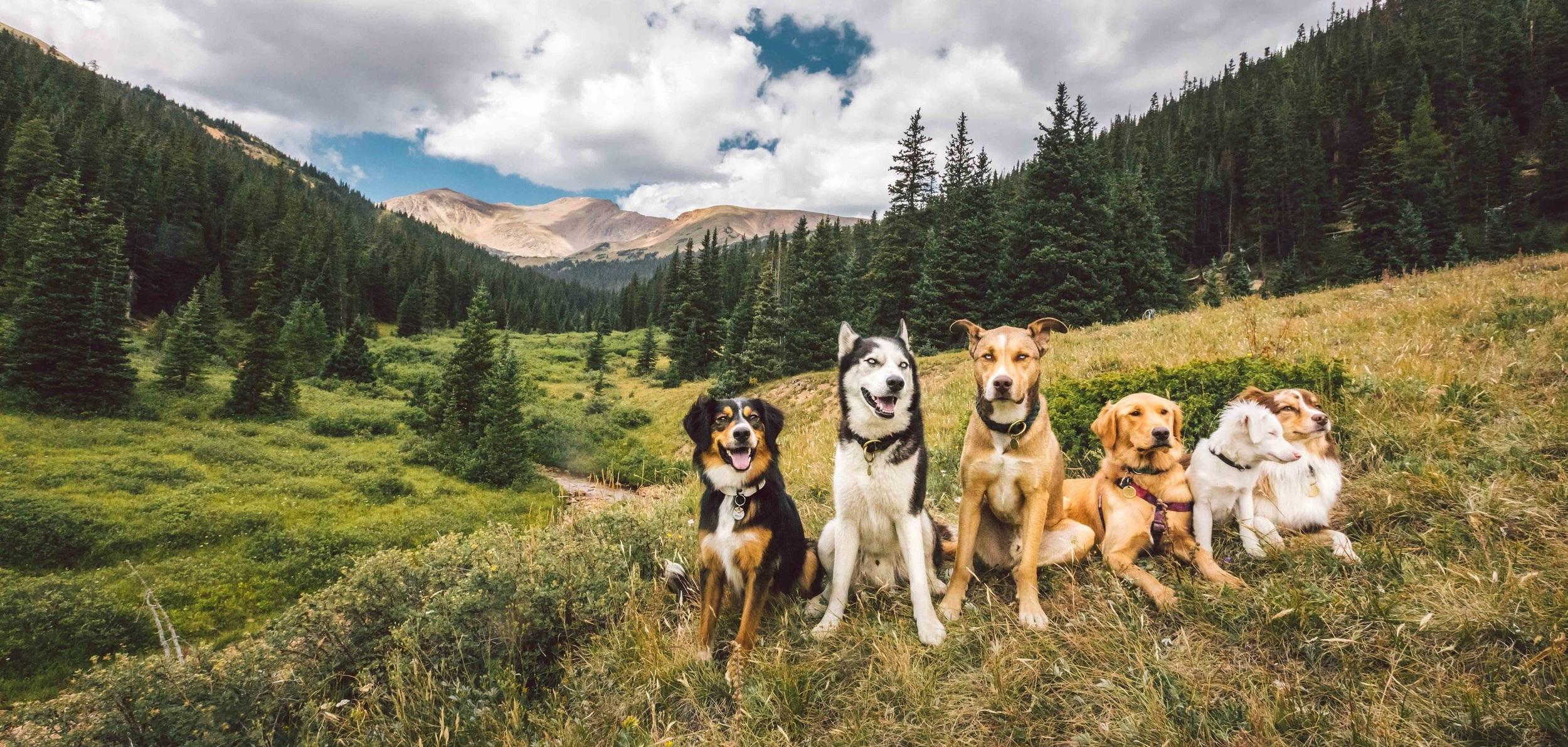 Herman+Gulch+Group+Hike+Dog.jpg