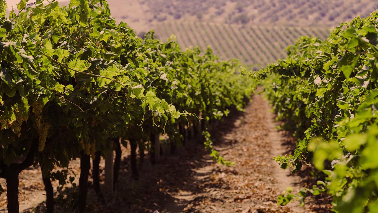 wine doc 2.jpg