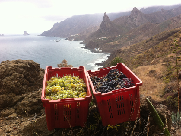 A view from one of the Envínate vineyards, complete with baskets of hand-picked grapes.