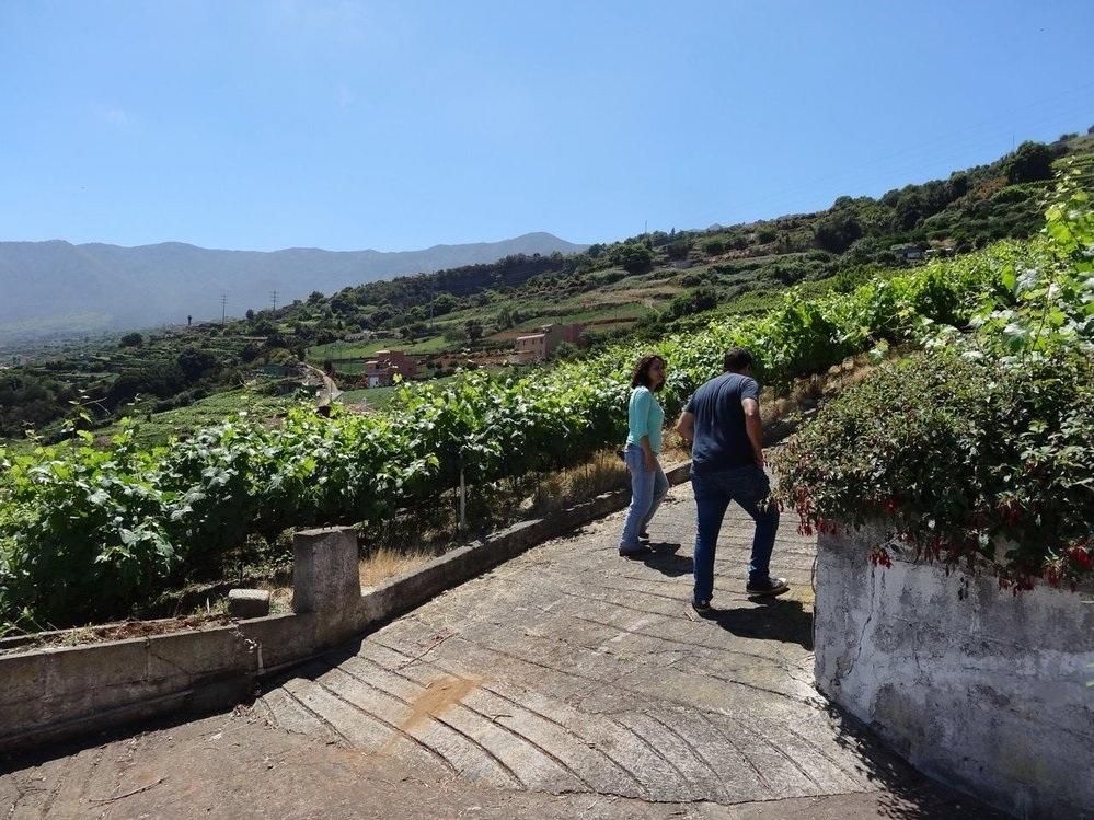Dolores Cabrera Fernández among her vineyards.