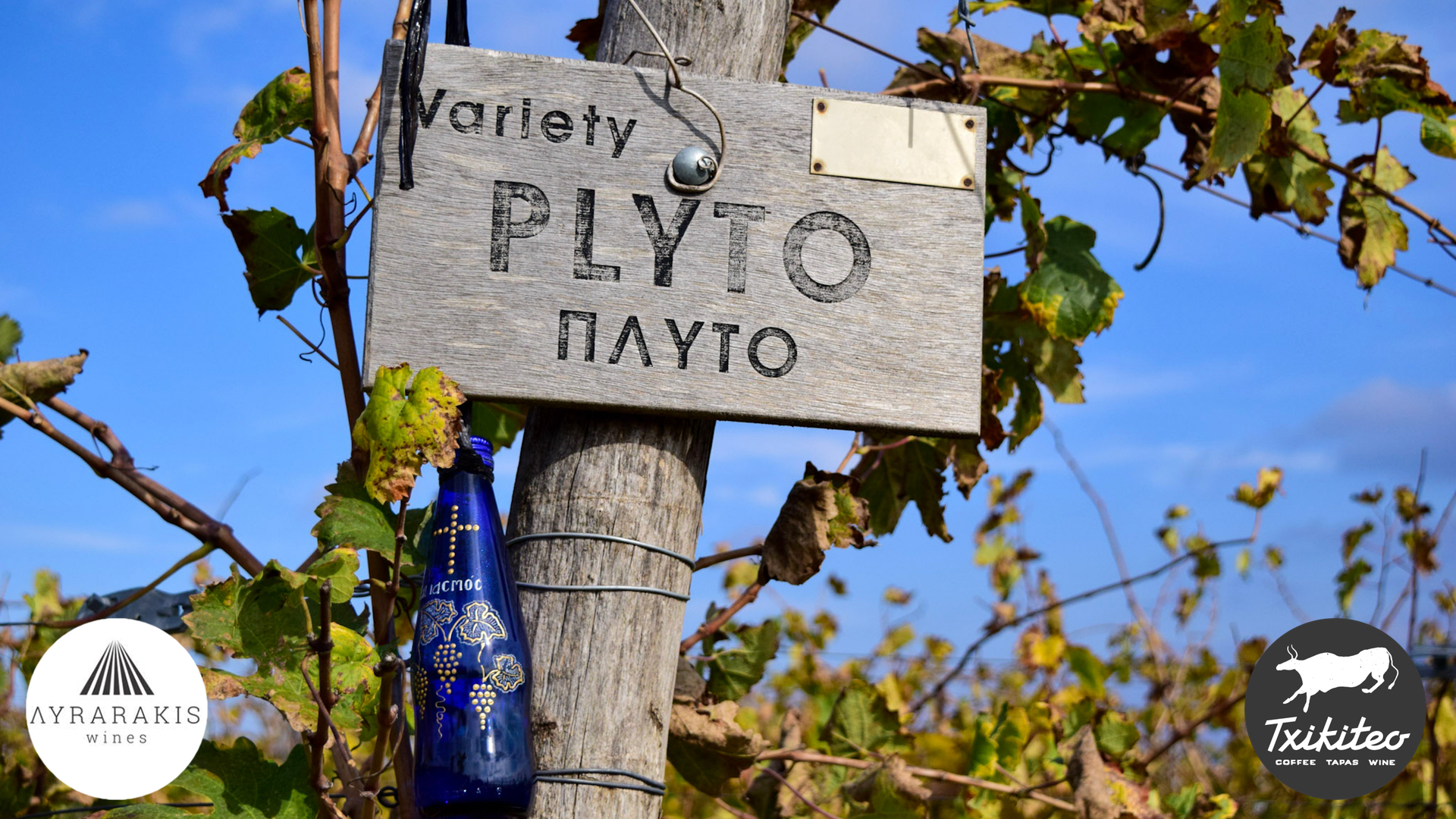 "The Plytó grape variety was saved from extinction by the Lyrarakis family, when it was planted in the ""Psarades"" family vineyard at 480m altitude in central Crete in the early '90s."