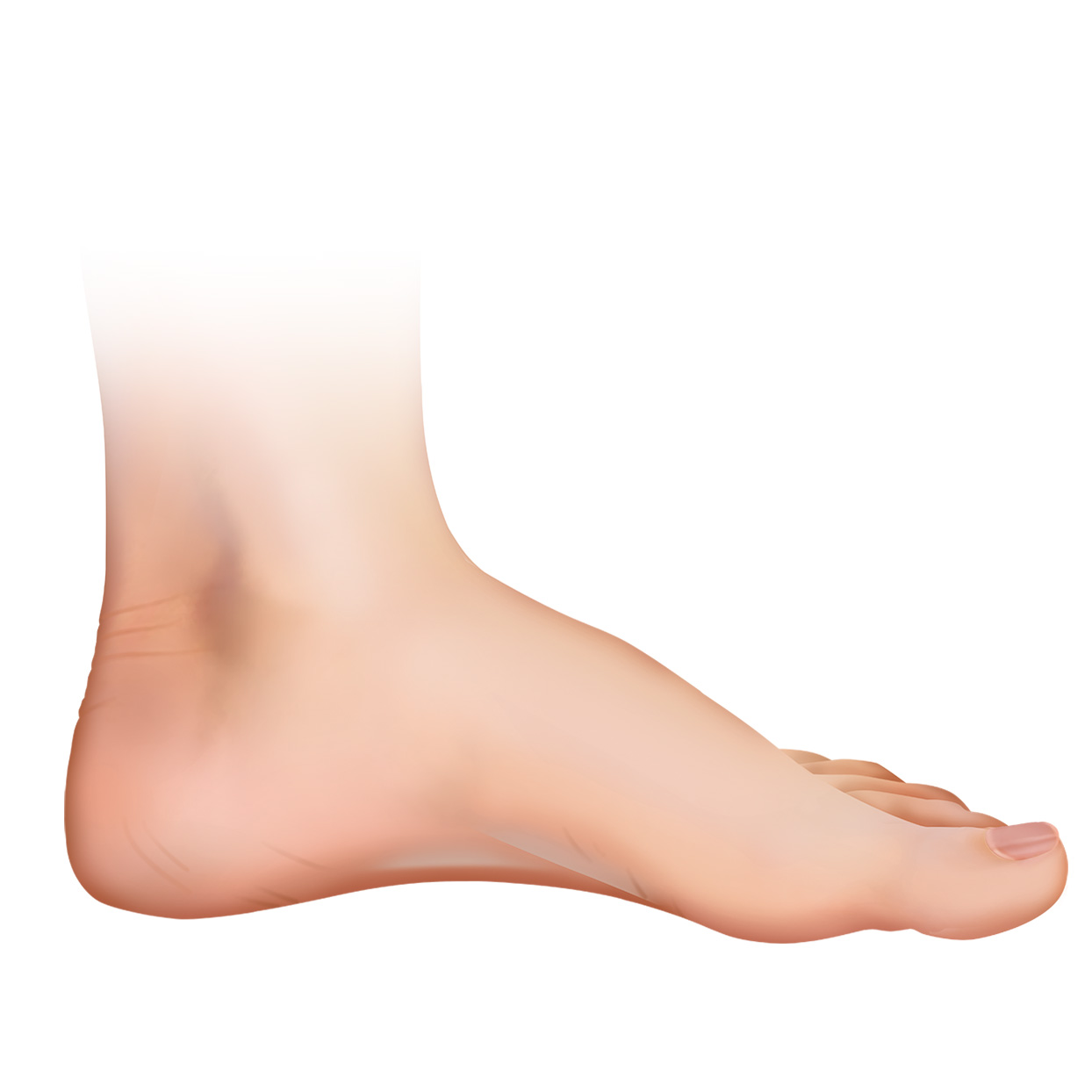 foot lateral.jpg