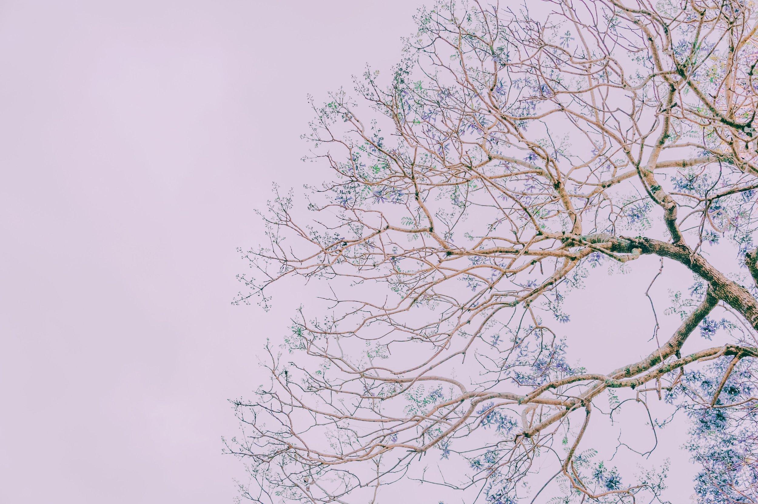 branches-desktop-backgrounds-free-wallpaper-1406866.jpg
