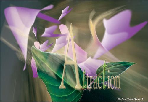 attraction1.jpg