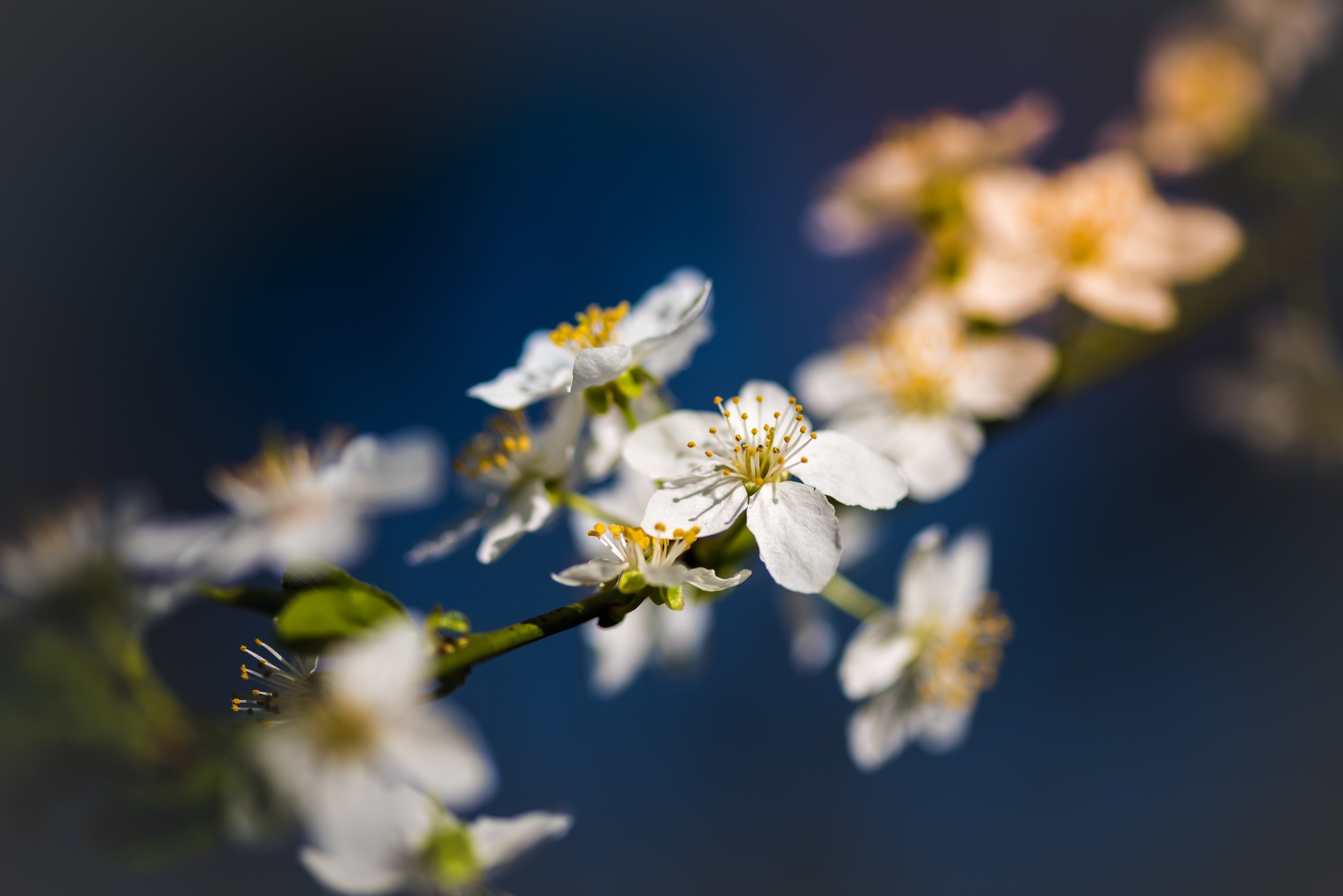 spring-allergy-flowers.jpg