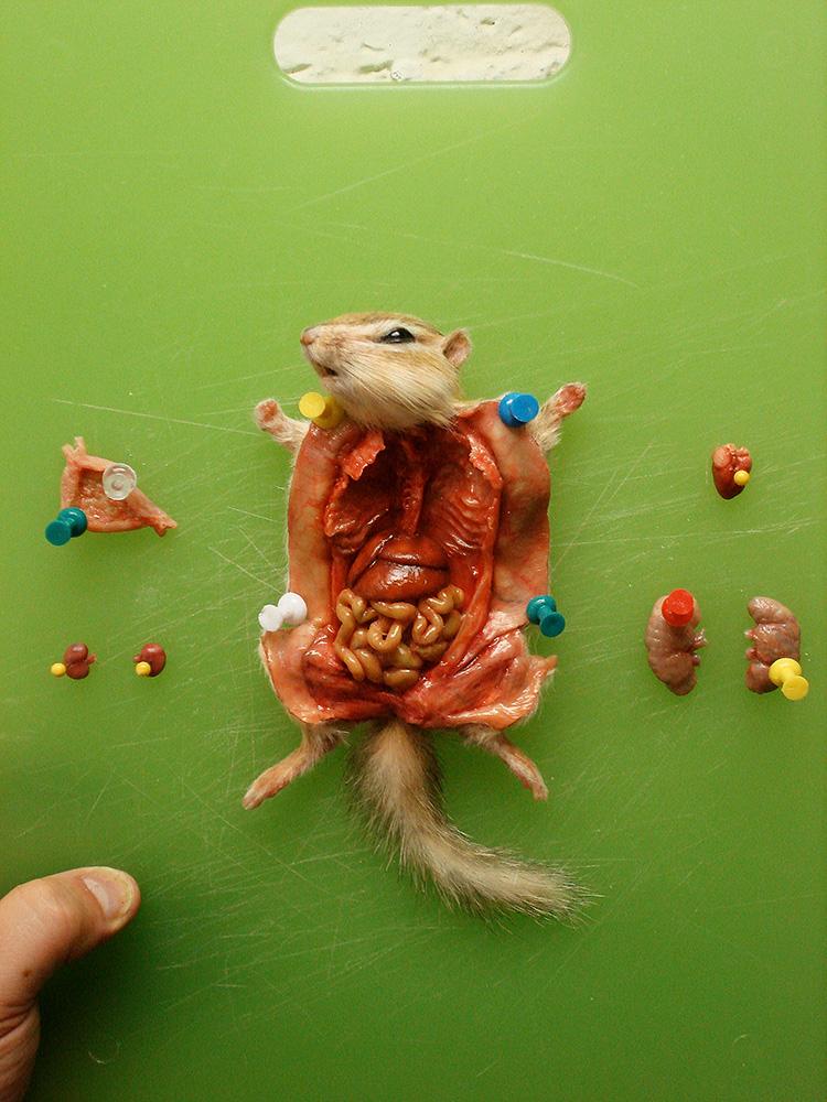 dissected chipmunk is from catherine zeta jones' film,  the rebound