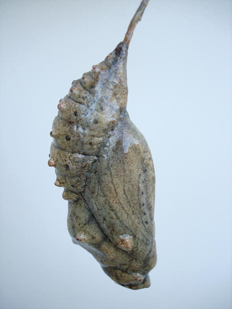 chrysalis prop from ray bradbury's  chrysalis