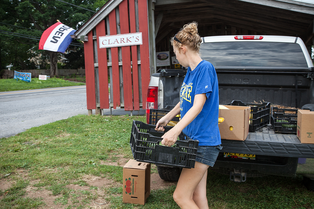 Nora delivers vegetables picked within the hour to the farm stand for CSA pickup