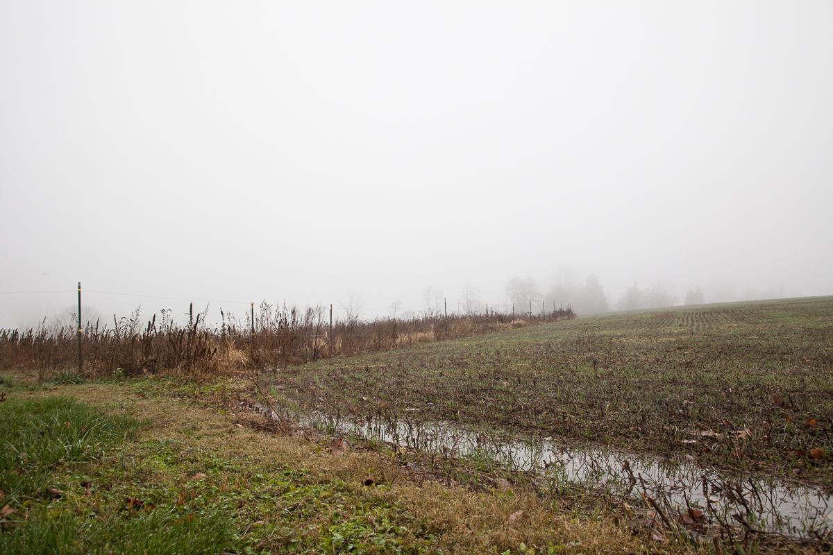 Shannon_Varley_garden_in_fog_234.JPG