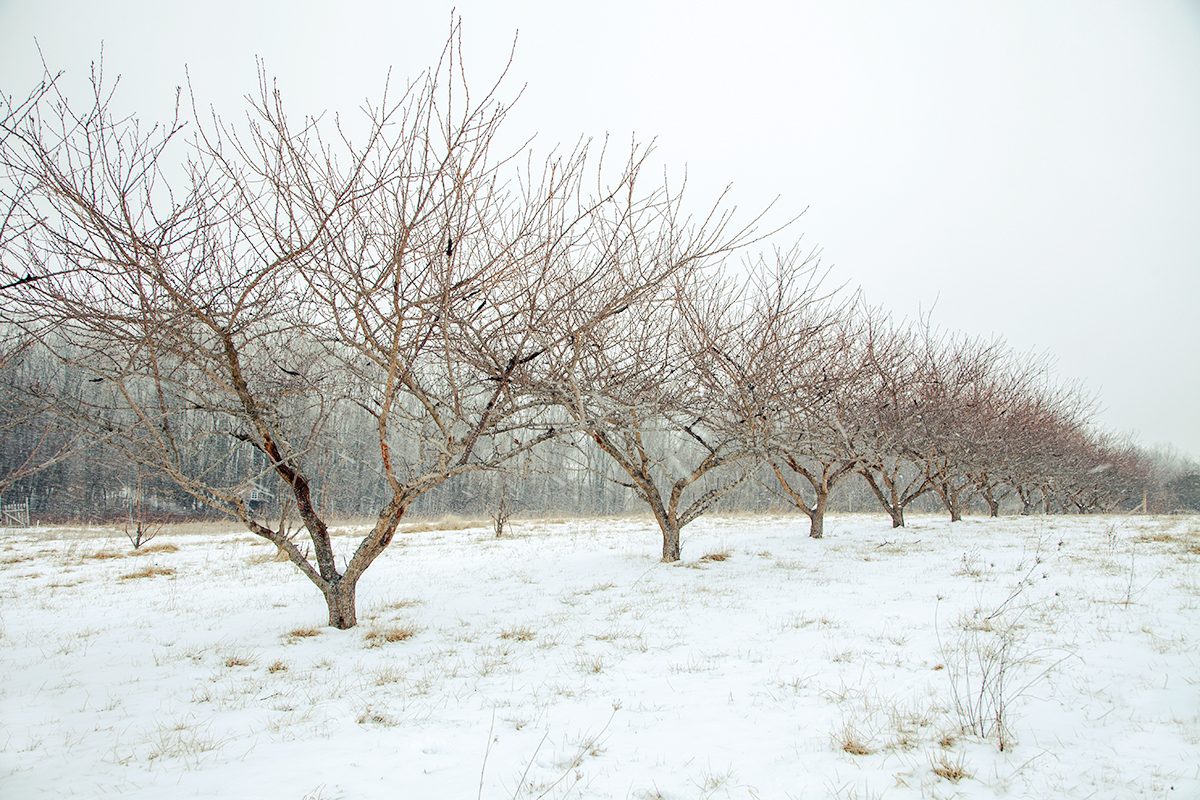 Moutoux_Orchards_snow_0005.jpg