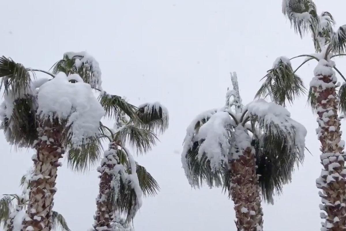 The Palm Trees in my neighborhood!
